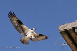 Birds-PatriciaCalder-11