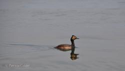 Birds-PatriciaCalder-13
