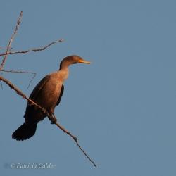 Birds-PatriciaCalder-14