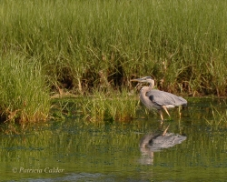 Birds-PatriciaCalder-15