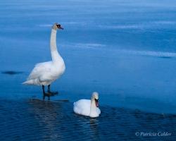 Birds-PatriciaCalder-21