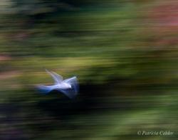 Birds-PatriciaCalder-27