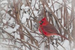 Birds-PatriciaCalder-33