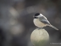 Birds-PatriciaCalder-23