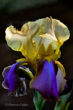 Flowers-Gardens-PatriciaCalder-12