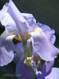 Flowers-Gardens-PatriciaCalder-16
