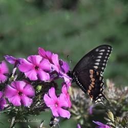 Flowers-Gardens-PatriciaCalder-17