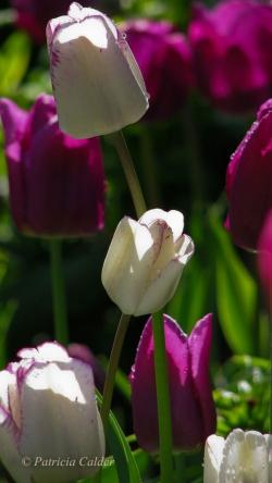 Flowers-Gardens-PatriciaCalder-20
