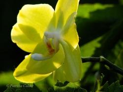 Flowers-Gardens-PatriciaCalder-26