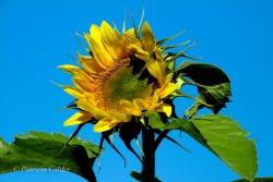 Flowers-Gardens-PatriciaCalder-3