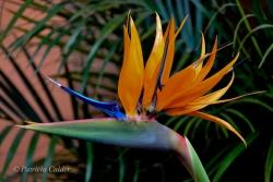 Flowers-Gardens-PatriciaCalder-31