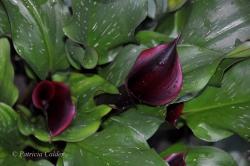 Flowers-Gardens-PatriciaCalder-33