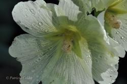 Flowers-Gardens-PatriciaCalder-34