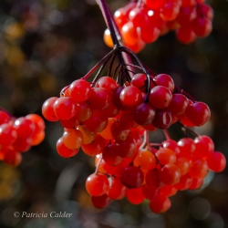 Flowers-Gardens-PatriciaCalder-39