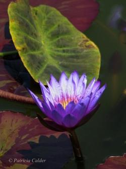 Flowers-Gardens-PatriciaCalder-5