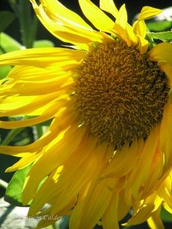 Flowers-Gardens-PatriciaCalder-6