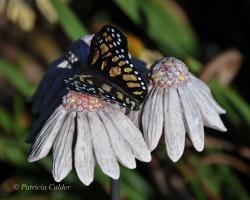 Flowers-Gardens-PatriciaCalder-9