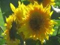 Flowers-Gardens-PatriciaCalder-2