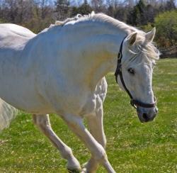 Horses-PatriciaCalder-1