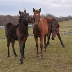Horses-PatriciaCalder-10