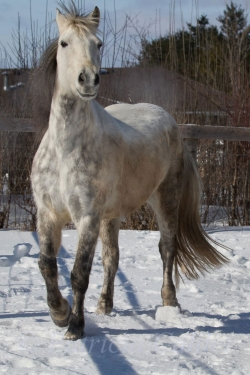 Horses-PatriciaCalder-14