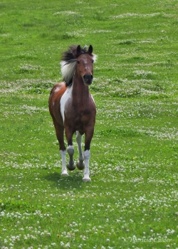 Horses-PatriciaCalder-15