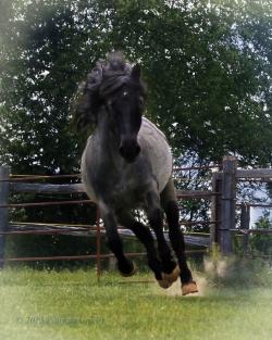 Horses-PatriciaCalder-17