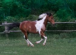 Horses-PatriciaCalder-19