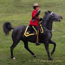 Horses-PatriciaCalder-21