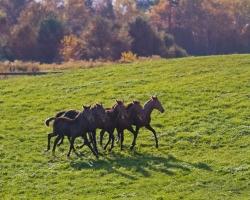 Horses-PatriciaCalder-23