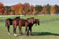 Horses-PatriciaCalder-24