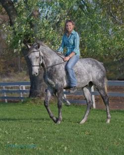 Horses-PatriciaCalder-25