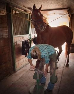Horses-PatriciaCalder-26
