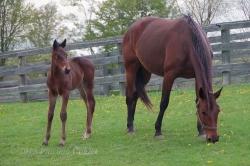 Horses-PatriciaCalder-28