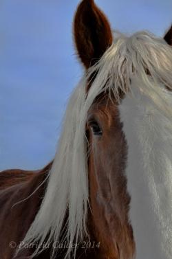 Horses-PatriciaCalder-3