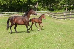 Horses-PatriciaCalder-30