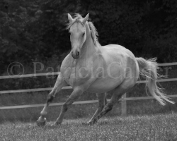 Horses-PatriciaCalder-32