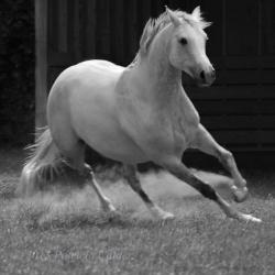 Horses-PatriciaCalder-33