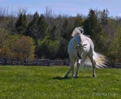 Horses-PatriciaCalder-38