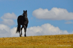 Horses-PatriciaCalder-40