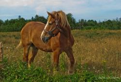 Horses-PatriciaCalder-41