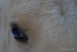 Horses-PatriciaCalder-44