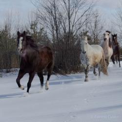 Horses-PatriciaCalder-45