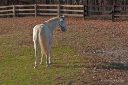Horses-PatriciaCalder-48