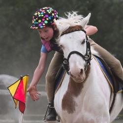 Horses-PatriciaCalder-50