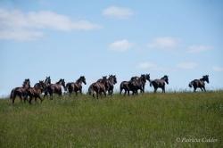 Horses-PatriciaCalder-51