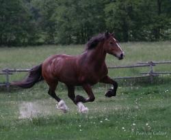 Horses-PatriciaCalder-52