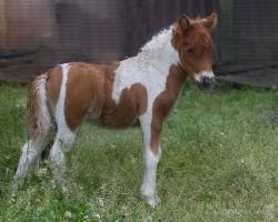 Horses-PatriciaCalder-53