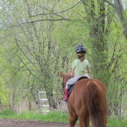 Horses-PatriciaCalder-55