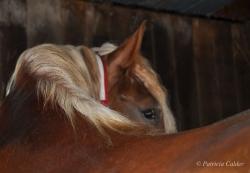 Horses-PatriciaCalder-58